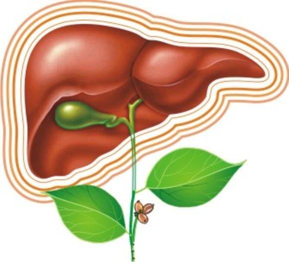 Что представляет собой заболевание стеатоз?
