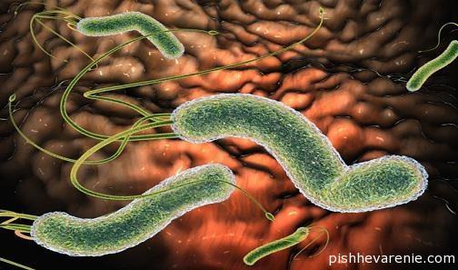 Инфекция Хеликобактериоз: симптомы и лечение