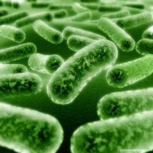 """При благоприятных услвих пробиотики  """"оживают"""""""
