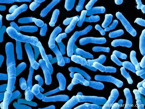 Бифидобактерии: препараты, которые применяют для лечения дисбактериоза