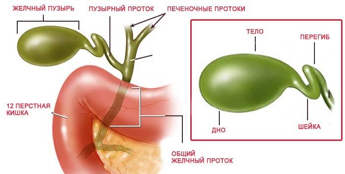 Загиб желчного пузыря: симптомы, причины, лечение и прогноз
