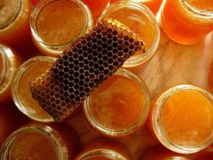 Прополис - продукт жизнедеятельности пчел