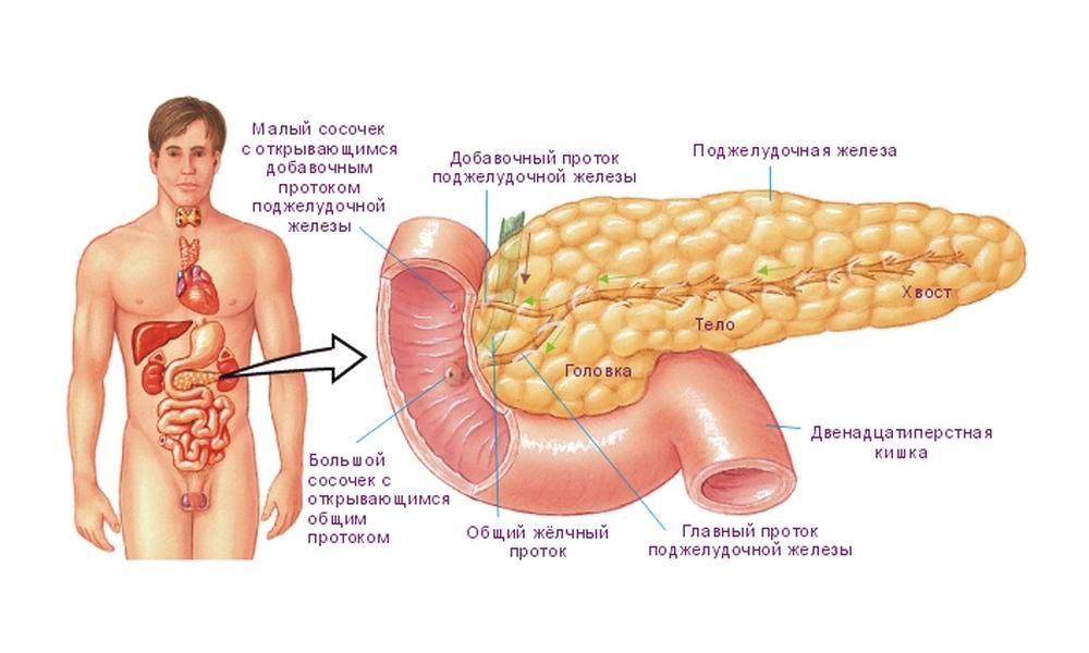 Лечение поджелудочной железы в домашних условиях. Диета как часть домашнего лечения