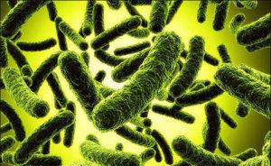 Патогенных микроорганизмов в кале быть вообще не должно