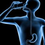 Через пищевод пища поступает в желудок