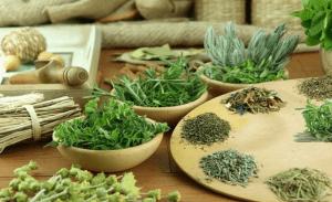 Лекарственные растения дополнят медикаменты