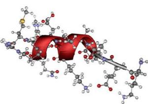 С-пептид - это фрагмент молекулы проинсулина