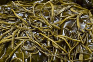 Вещество получают из морских водорослей