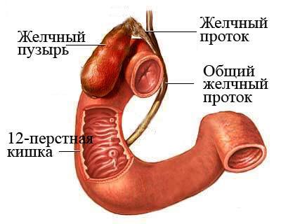 ДЖВП по гипокинетическому типу: симптомы, профилактика, лечение