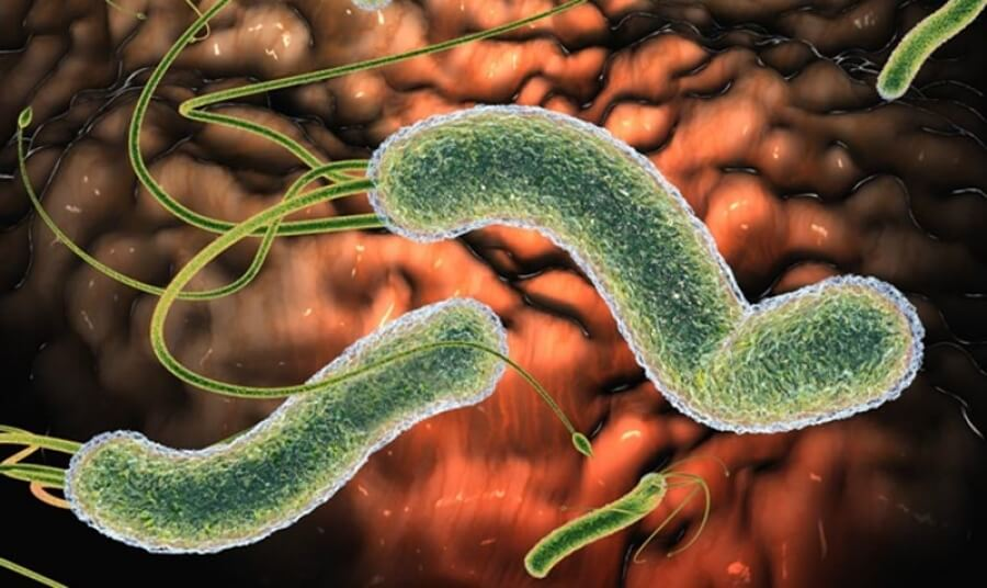 Хеликобактерный гастрит: бактериальное происхождение