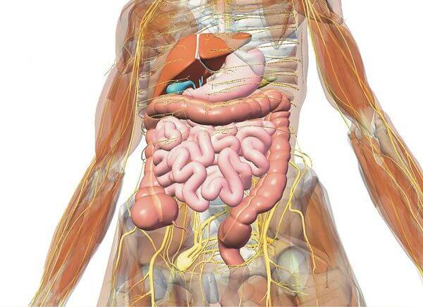 Если забит кишечник: симптомы и методы очищения