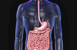 длина толстого кишечника