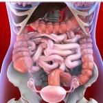 Что представляет собой толстый кишечник, какая длина толстого кишечника?