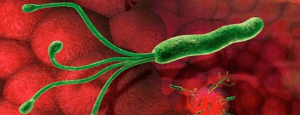 Хеликобактер пилори: какова допустимая норма бактерий для человеческого организма
