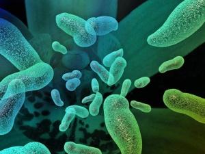 Кишечная инфекция как причина острой диареи