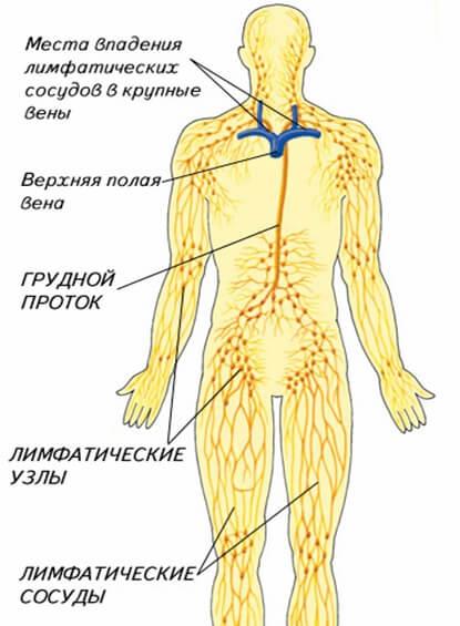 Очищение лимфатической системы – упражнения, диета, народные средства, авторская методика