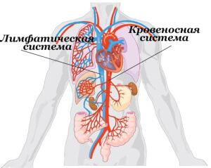 Питание для здоровья лимфатической системы youtube.