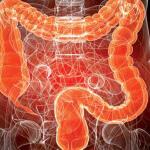 Какая длина кишечника взрослого человека, его особенности и функции