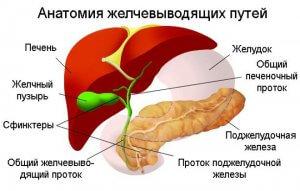 Дискинезия желчных протоков