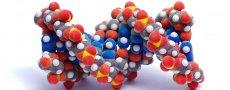 Продукты, содержащие большое количество белка: польза для организма