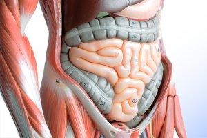 Обследование кишечника