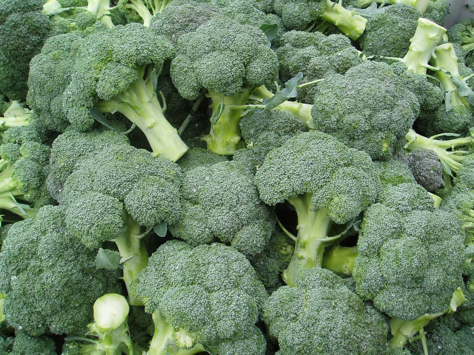 Брокколи вареная: калорийность и польза продукта