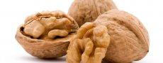 Желуди Богов: полезность грецкого ореха