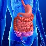 Ноющая боль внизу живота справа — первый признак поражения брюшной полости и пищеварительного тракта