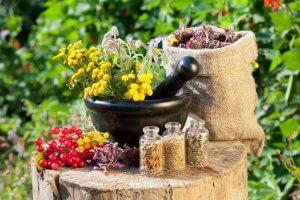 Травы для лечения кишечника