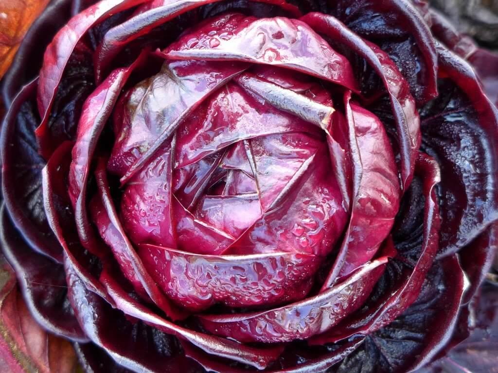 Салат из фиолетовой капусты: польза для пищеварения, лечебные и питательные свойства