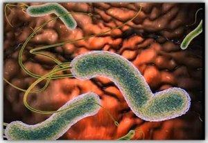 Победим хеликобактер: лечение антибиотиками