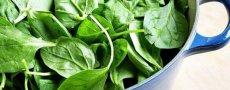 Шпинат – что это за растение, какими свойствами обладает, рецепты с его применением