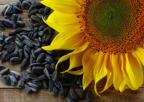 Поправляются ли от семечек подсолнуха и тыквы