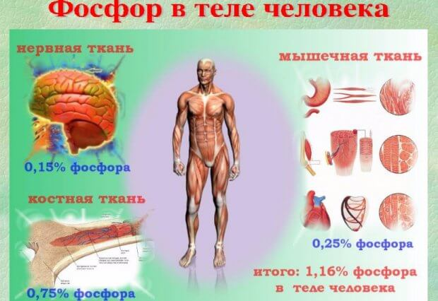 Фосфор в организме