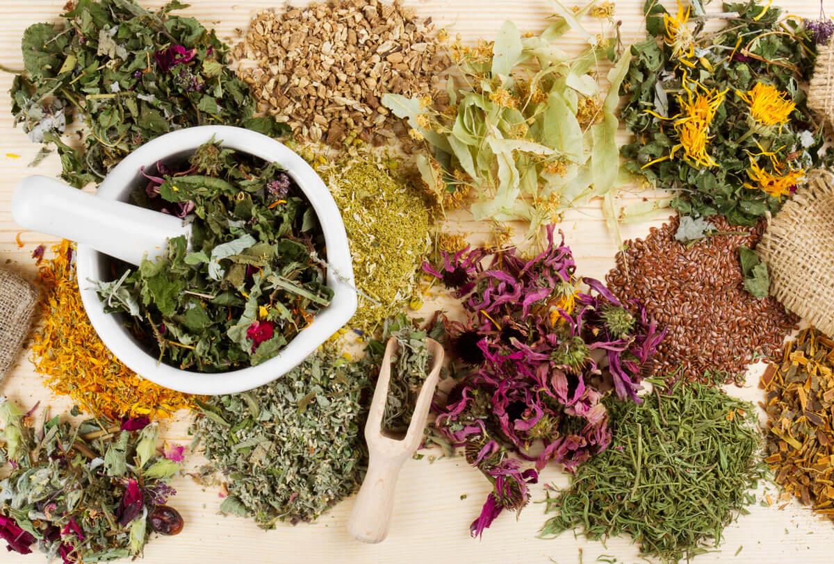Самые эффективные растения и травы при панкреатите и холецистите