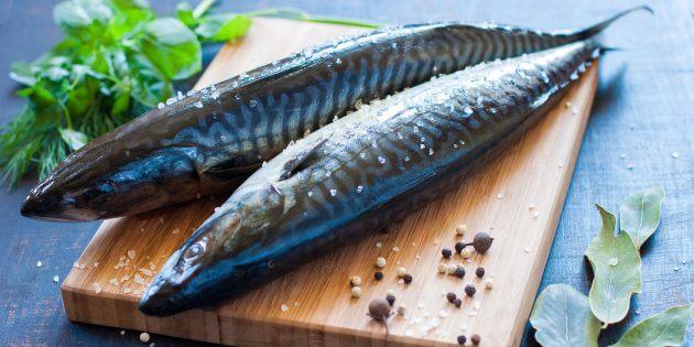 Скумбрия — белки, жиры, углеводы, полезные, вредные свойства рыбы