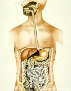 Кардия - нижний пищеводный сфинктер