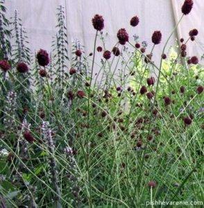 Заготовить трави может самостоятельно каждый желающий!