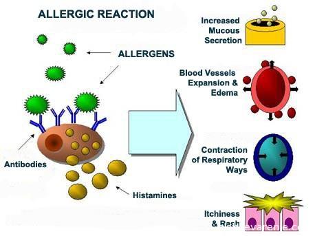 Гистамин и его роль в развитии аллергических реакций