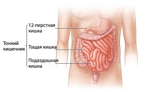 Заболевания тонкого кишечника: особенности, причины, лечение, профилактика