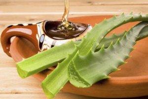 Алоэ и мед – натуральное и чудодейственное средство для здоровья желудка