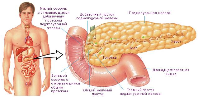 Симптомы болезни двенадцатиперстной кишки: дуоденит, дискинезия, язва, рак
