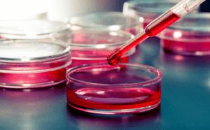 Исследование крови на онкомаркеры