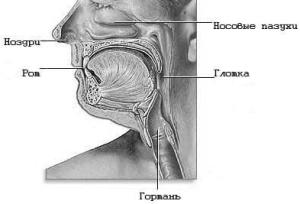 Верхний отдел пищеварительного тракта