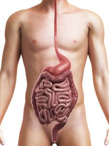 Дисфункция кишечника