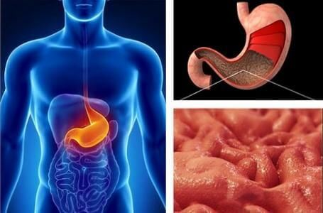 Где находится желудок: расположение, строение и функции в организме