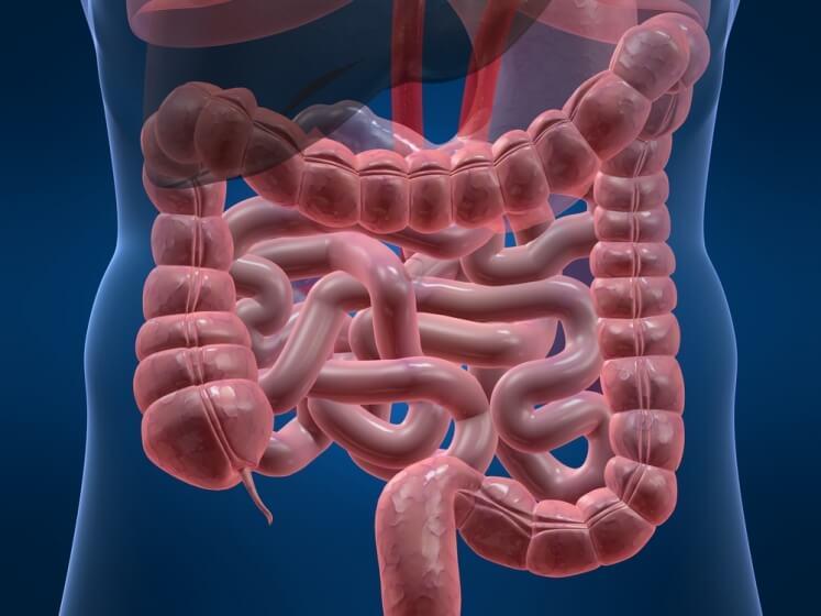Чем отличаются отделы тонкого кишечника