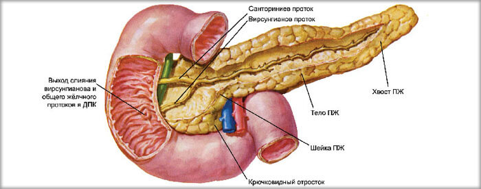 Что такое диффузное изменение поджелудочной железы: болезнь, или симптоматика?