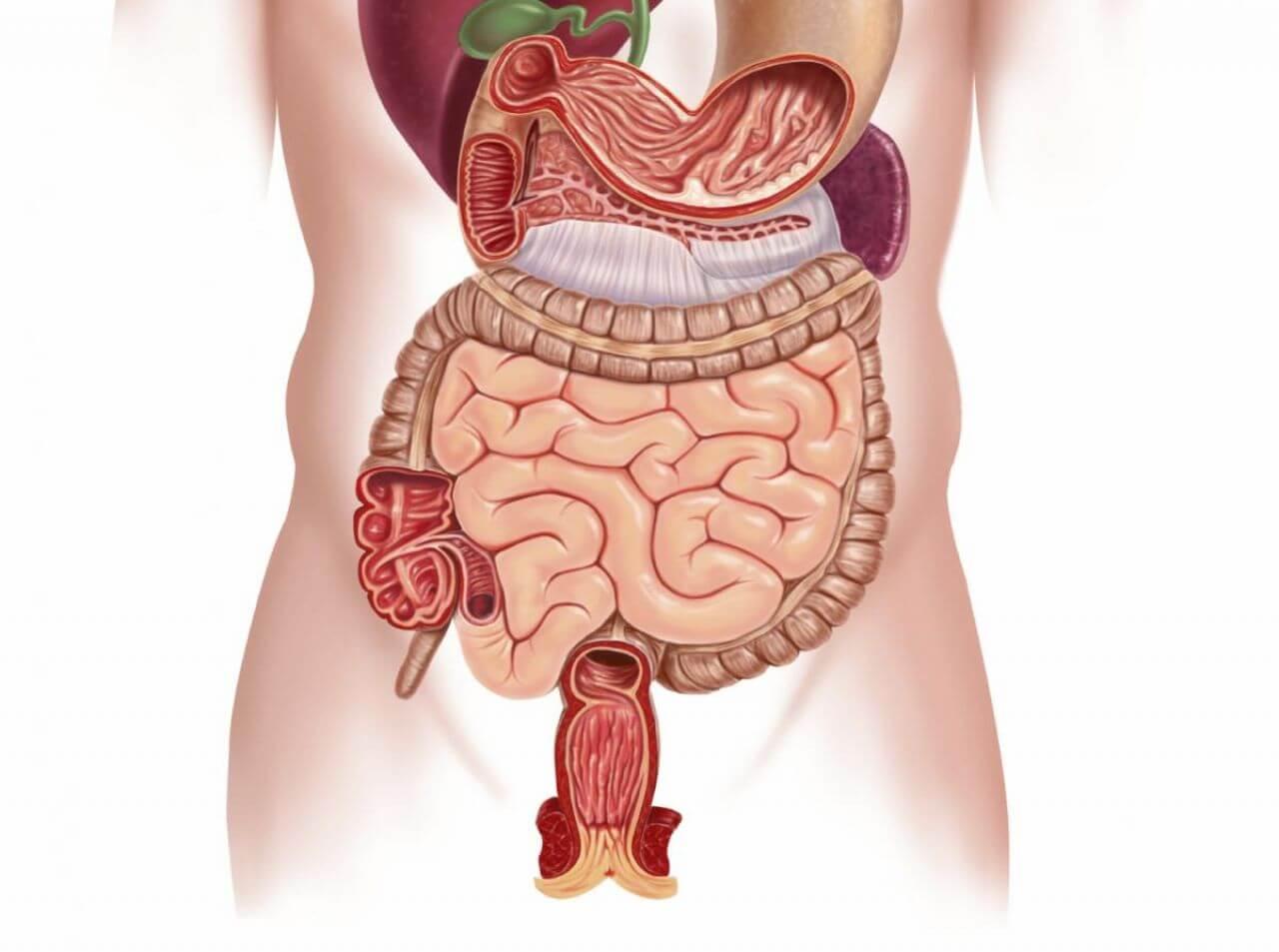 Заболевания ЖКТ: симптомы различных патологий отделов пищеварительной системы человека