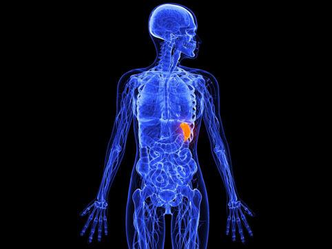Каким должно быть лечение, если селезенка увеличена?